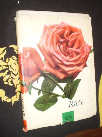 Růže - Večeřa a kolektiv
